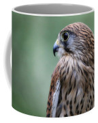 European Kestrel Coffee Mug