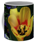 Perfect Yellow And Red Flowering Tulip In A Garden Coffee Mug