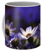Pericallis On A Cool Spring Evening 4 Coffee Mug