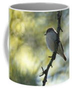 Pied Flycatcher 1 Coffee Mug