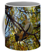 Pied Imperial Pigeon Coffee Mug