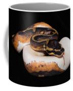 Piedbald Ball Python Coffee Mug