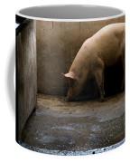 Pigs At A Hog Farm In Kansas Coffee Mug
