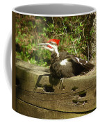 Pileated Woodpecker1 Coffee Mug