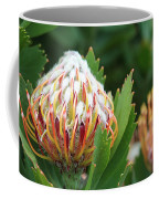 Pincushion Protea Coffee Mug