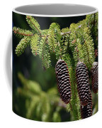Pine Cones On The Bough Coffee Mug