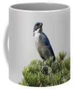 Pine Nut Delight Scrub Jay Coffee Mug