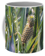 pineapple plantation in Kerala - India Coffee Mug