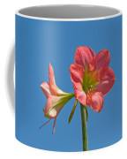 Pink Amaryllis Flowering In Spring Coffee Mug