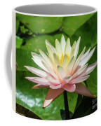 Pink And White Water Lily Coffee Mug