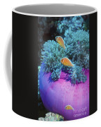 Pink Anemonefish Protect Their Purple Coffee Mug by Michael Wood