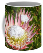 Pink King Protea Flowers Coffee Mug