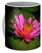 Pink Summer Water Lily Coffee Mug