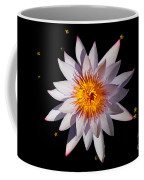Pink Tipped Water Lily On Black Coffee Mug