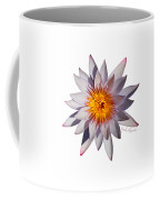 Pink Tipped Water Lily Transparent Coffee Mug