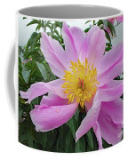 Pinwheel - Bowl Of Beauty Coffee Mug