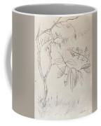 Plant Study Coffee Mug