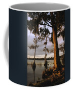 Plantation Gardens, Cypress Trees Coffee Mug