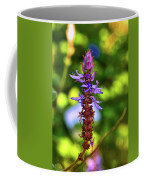 Plectranthus Caninus 002 Coffee Mug