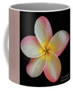 Plumeria Flower On Black Coffee Mug