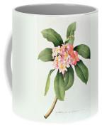 Plumeria Coffee Mug by Georg Dionysius Ehret