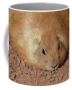 Plump Resting Prairie Dog Laying Down Coffee Mug