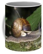 Pneumostome Of A Burgundy Snail Coffee Mug