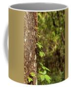 Poison Ivy Climbing Oak Tree Trunk Coffee Mug
