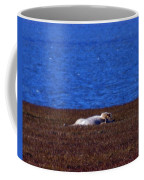 Polar Bear Rolling In Tundra Grass Coffee Mug