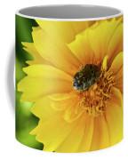 Pollen Feeding Beetle Coffee Mug
