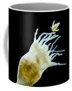 Polyp Of A. Aurita Jellyfish, Lm Coffee Mug