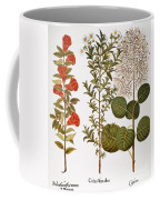Pomegranate, 1613 Coffee Mug