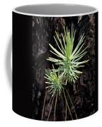Ponderosa Pine 3 Coffee Mug