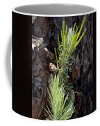 Ponderosa Pine 8 Coffee Mug