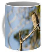Portrait Of A Merlin Falco Columbarius Coffee Mug