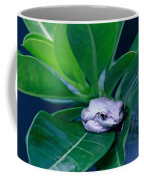 Portrait Of A Tree Frog Coffee Mug