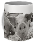 Portrait Of A Young Pig. Property Coffee Mug by Joel Sartore
