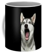 Portrait Of Amazement Siberian Husky Coffee Mug by Sergey Taran