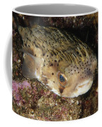 Porupinefish Close-up Portrait Sleeping Coffee Mug by James Forte