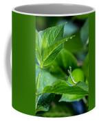 Praying Mantis-1 Coffee Mug