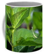 Praying Mantis-2 Coffee Mug