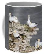 Precarious Nesting Bempton Gannets Coffee Mug