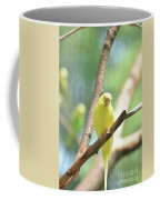 Precious Yellow Budgie Parakeeet In The Wild Coffee Mug
