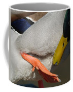 Preening - Santa Cruz, California Coffee Mug