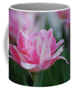 Pretty Candy Striped Pale Pink Tulip In Bloom Coffee Mug