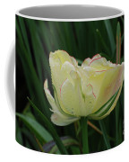 Pretty Cream Colored Tulip Edged In Red With Dew Coffee Mug