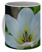 Pretty Perfect White Tulip Flower Blossom In The Spring Coffee Mug