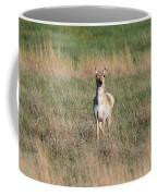 Pretty Pronghorn On The Plains Coffee Mug