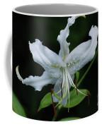 Pretty White Stargazer Lily Flower Blossom Coffee Mug