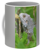 Profile Of A Gray Iguana In The Top Of A Bush Coffee Mug